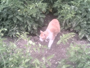 Kitty investigates the Garden